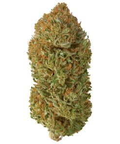 Wildflower - Bubba_product
